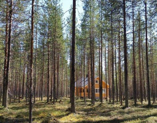cottage 11 summer forest 2 (5)