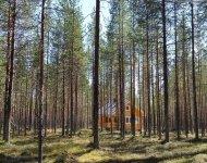Cabin 11 winter Rimma